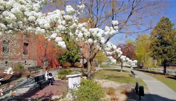 blog Image From the University of Nevada, Reno - Spring in Nevada!