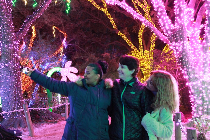 blog Image Chilly and Sparkly at the Spectacular Houston Zoo Lights